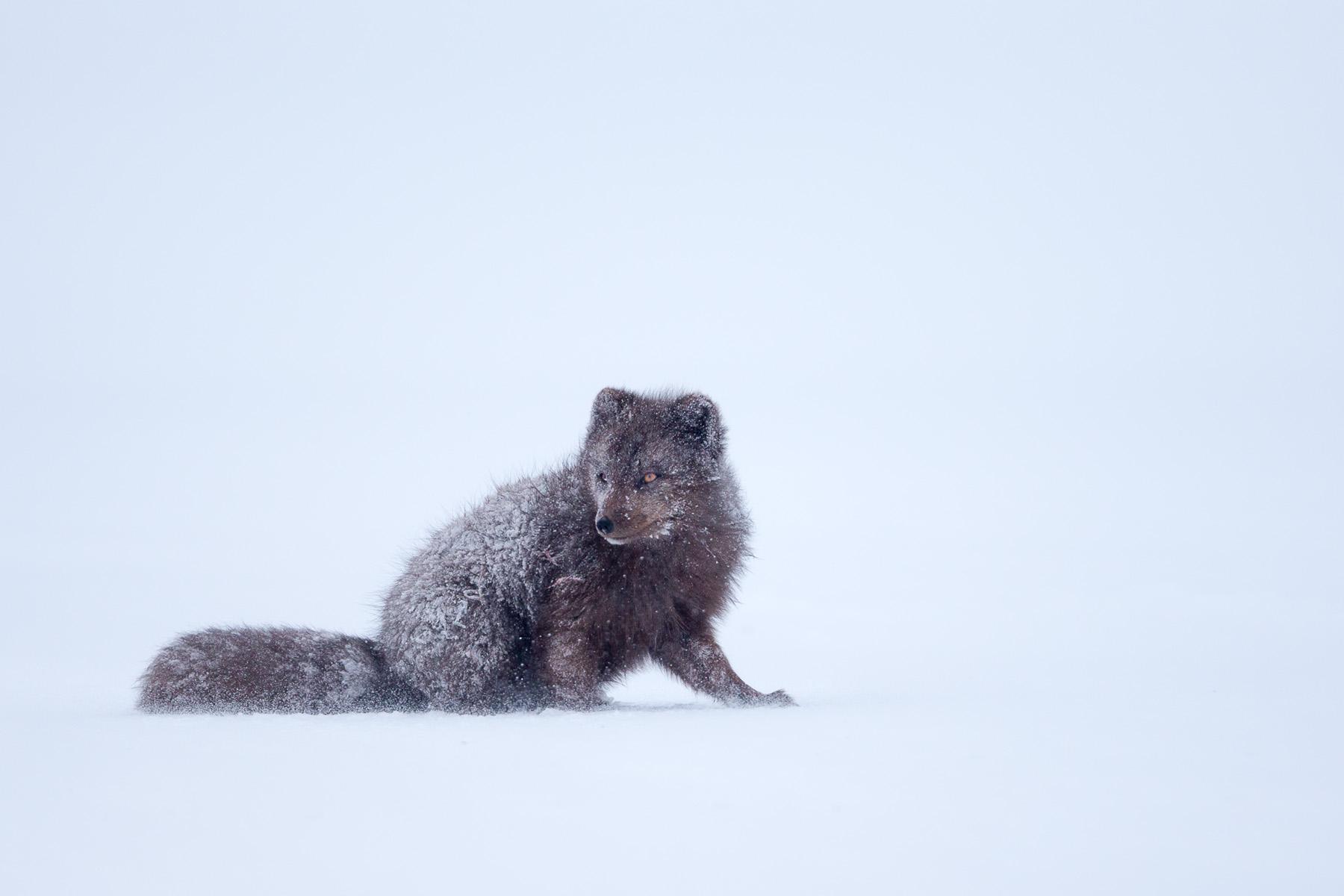 Arctic-7.jpg