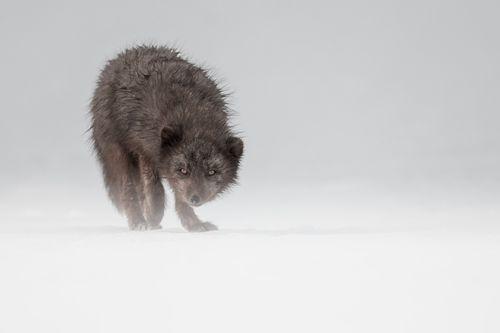 Arctic-17.jpg