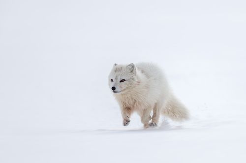 Arctic-3.jpg