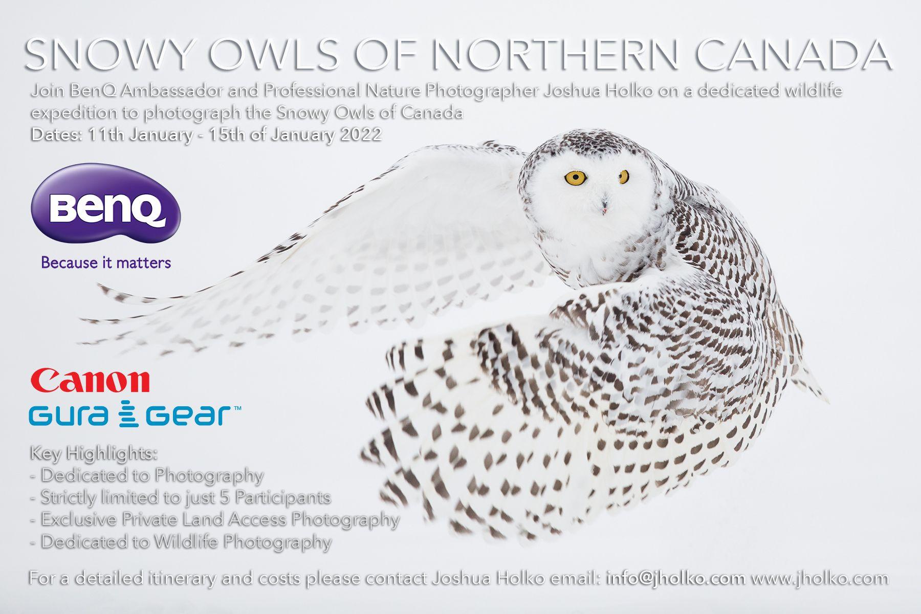 Snowy Owls of Northern Canada with Joshua Holko