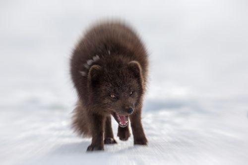 Arctic-11.jpg