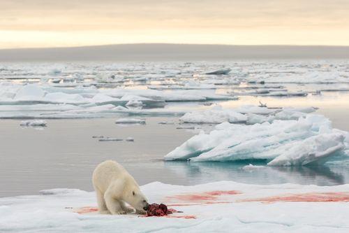Svalbard-31.jpg