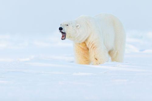 Svalbard-Winter-9.jpg