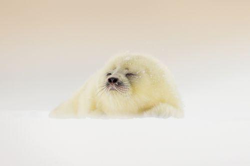 Svalbard-Winter-24.jpg