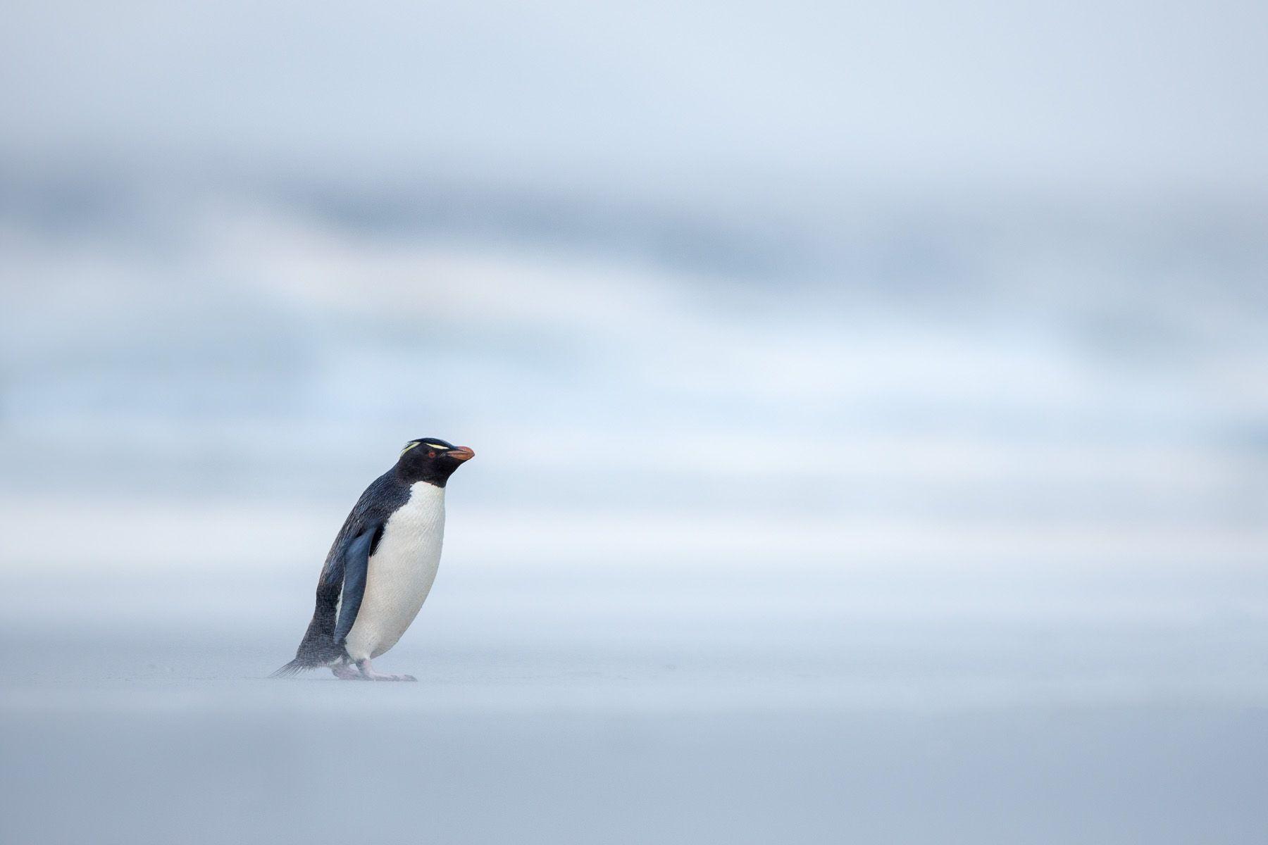 Falklands-3.jpg