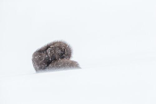 Arctic-20.jpg