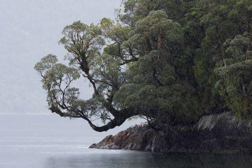 fiordlandNewZealand5.jpg
