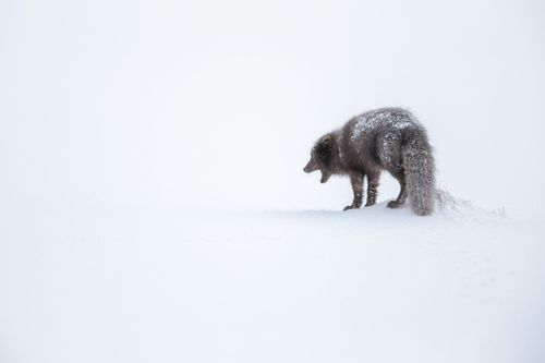 Arctic-1.jpg
