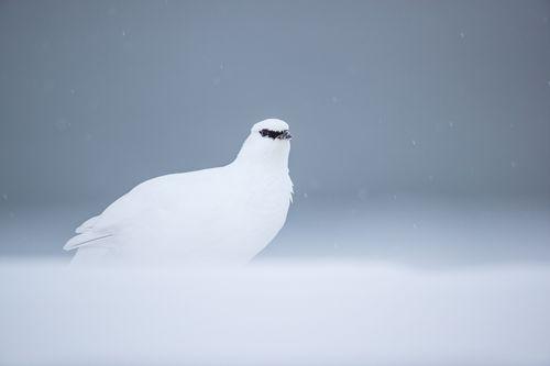 Svalbard-Winter-3.jpg