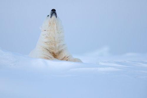 Svalbard-Winter-8.jpg