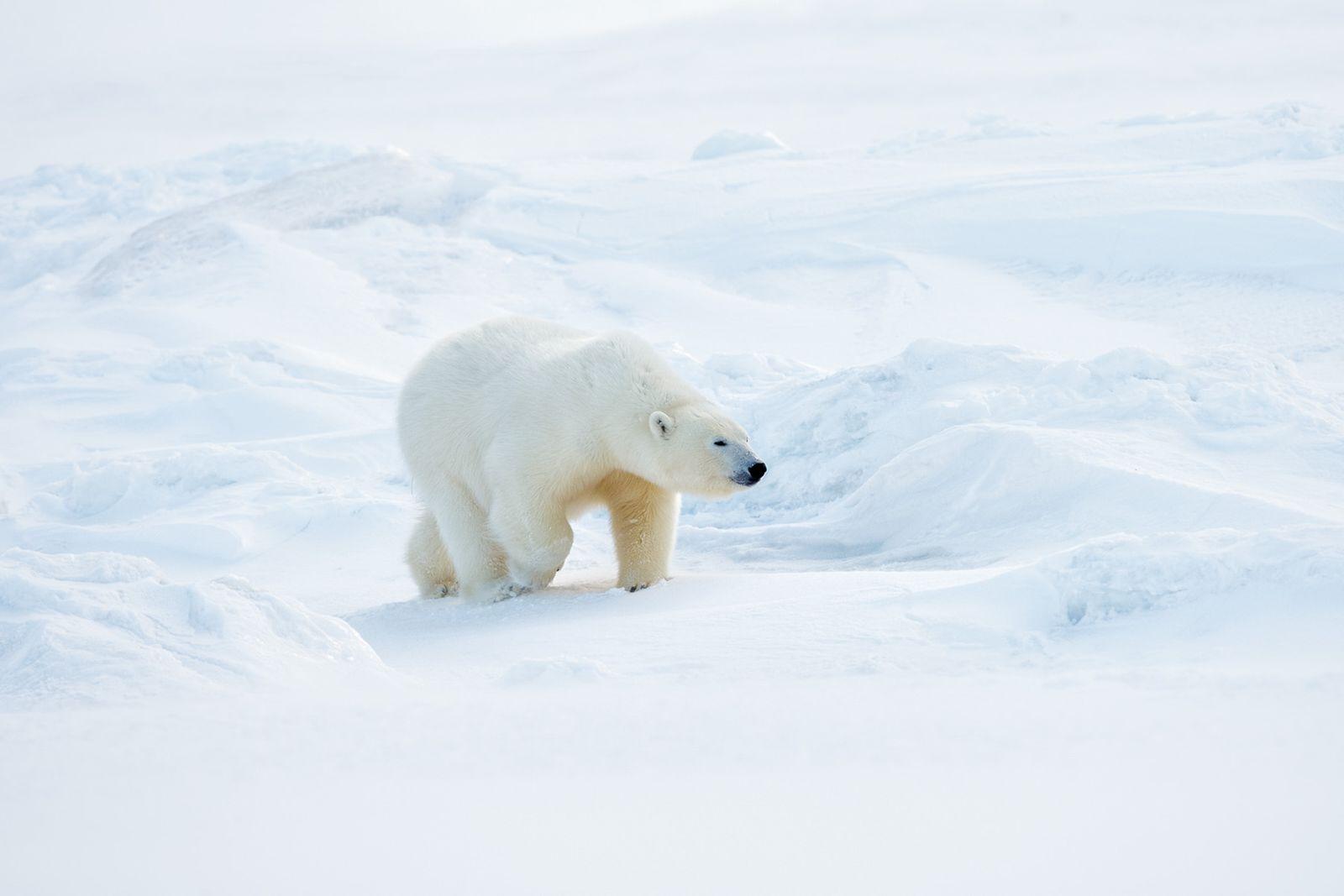 Svalbard-22.jpg