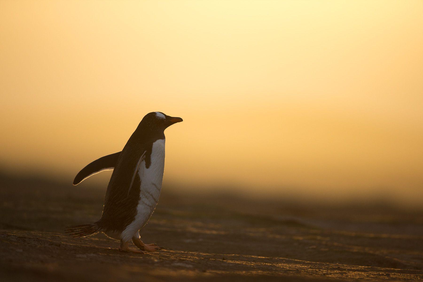 Falklands_4.jpg