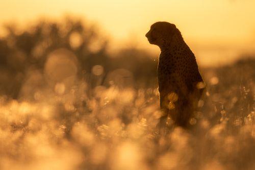 Africa Namibia Photography by Joshua Holko