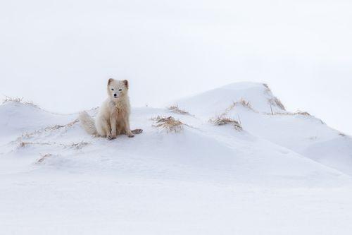 Arctic-5.jpg
