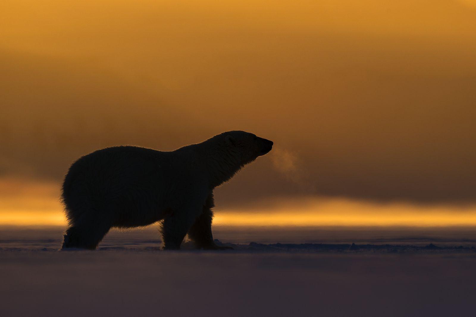 ArcticWinterPolarBears-1.jpg