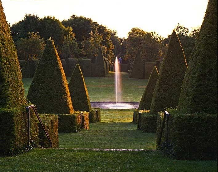 Topiary Sunrise