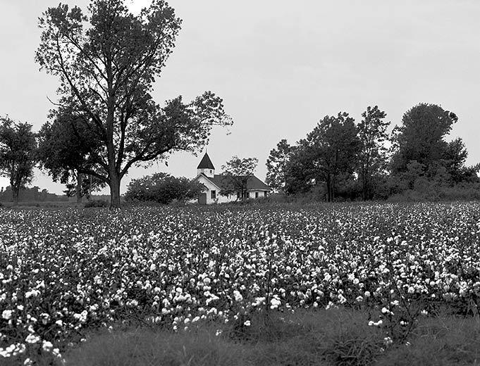 Cotton Field Church
