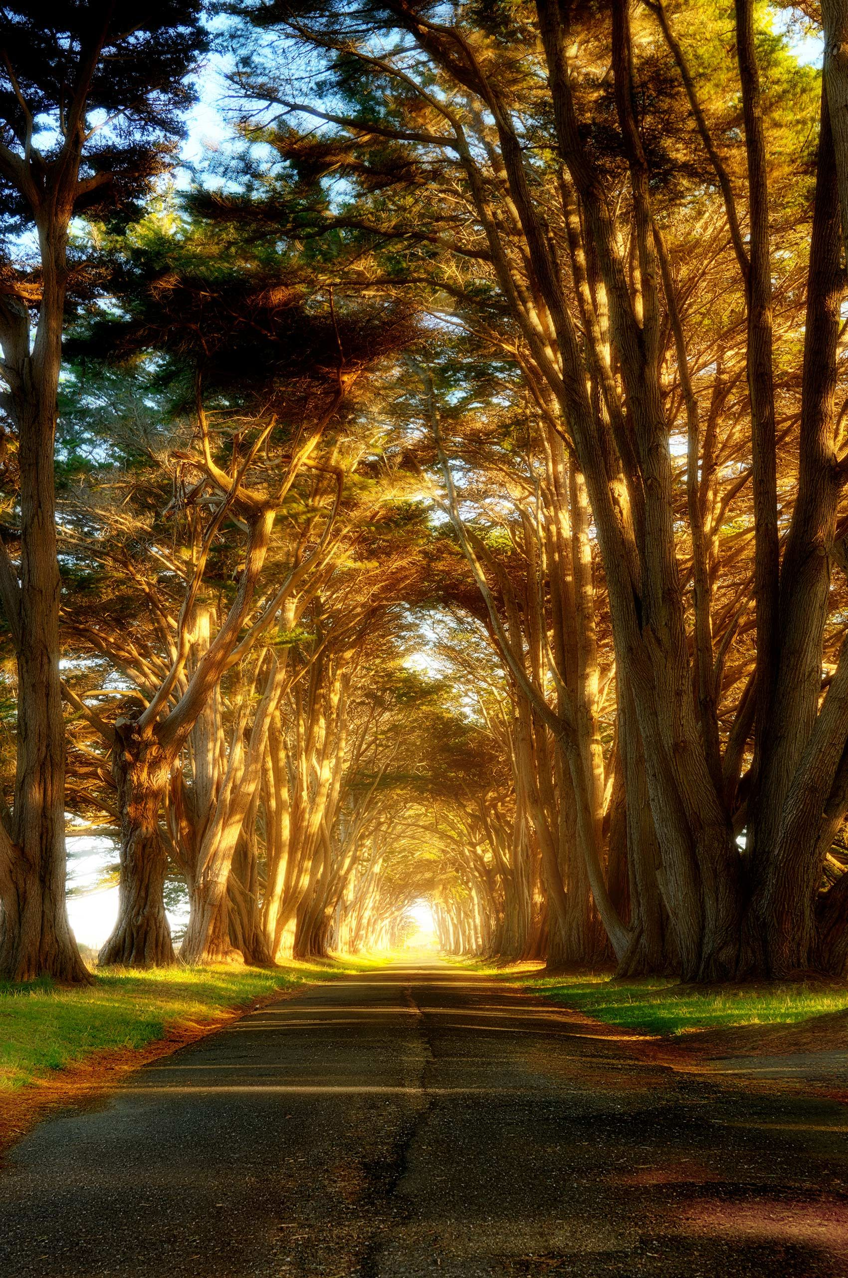 POINT_REYES_TREE_TUNNEL.jpg