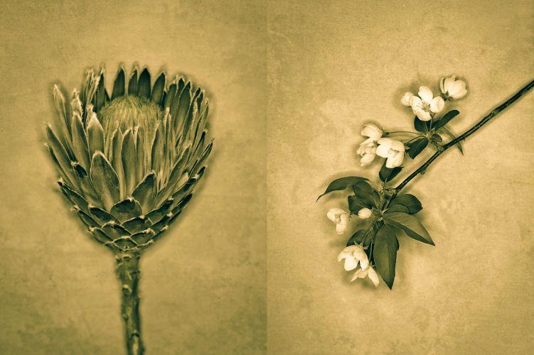 1flowers__2