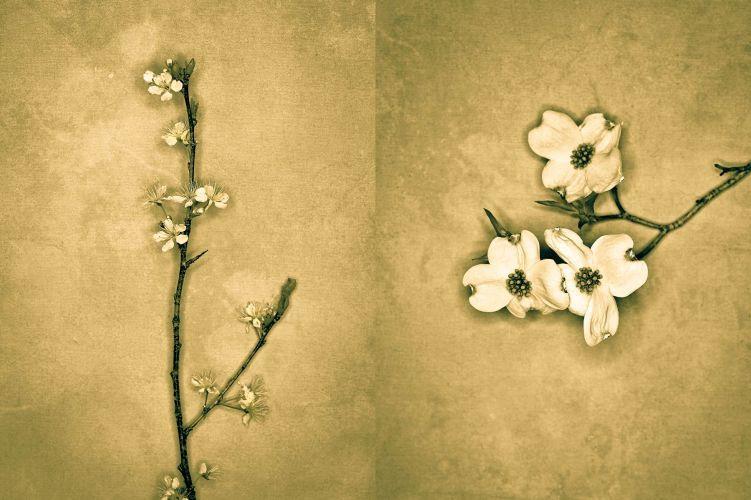 1flowers__3