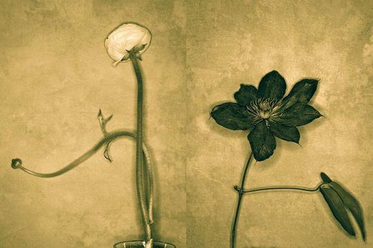 1flowers__1