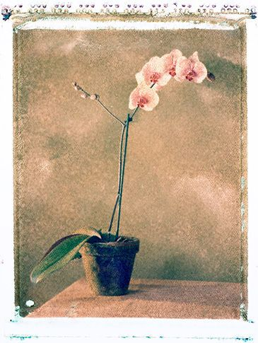 1orchid_2