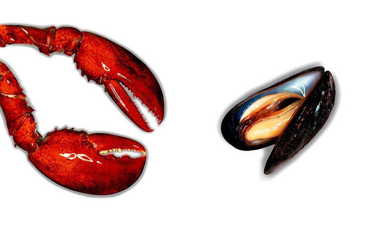 1rock_lobster_musc_