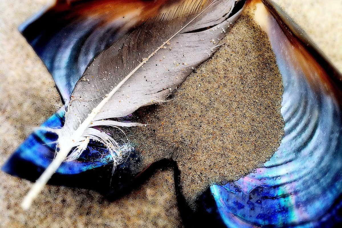 Feather ~ Sand ~ Shell No. 1