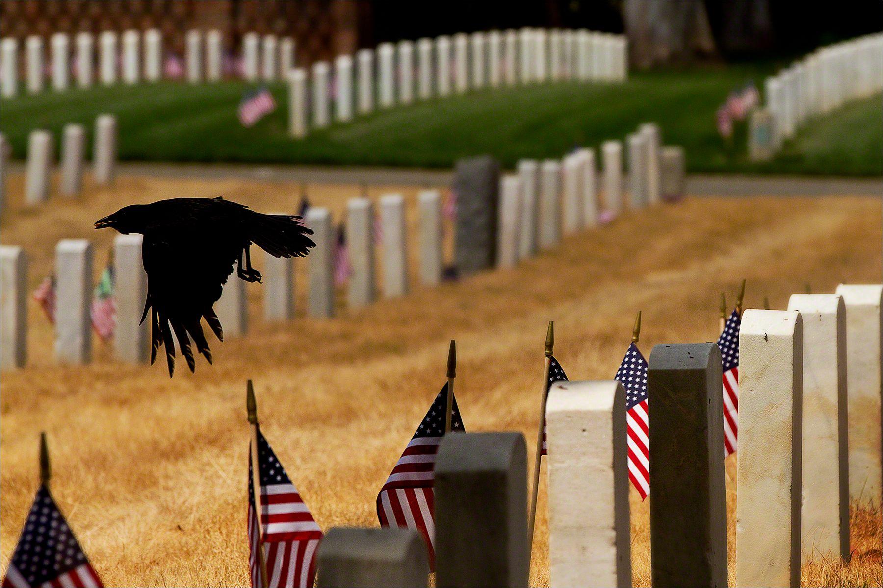 Veteran's Cemetery, Los Angeles