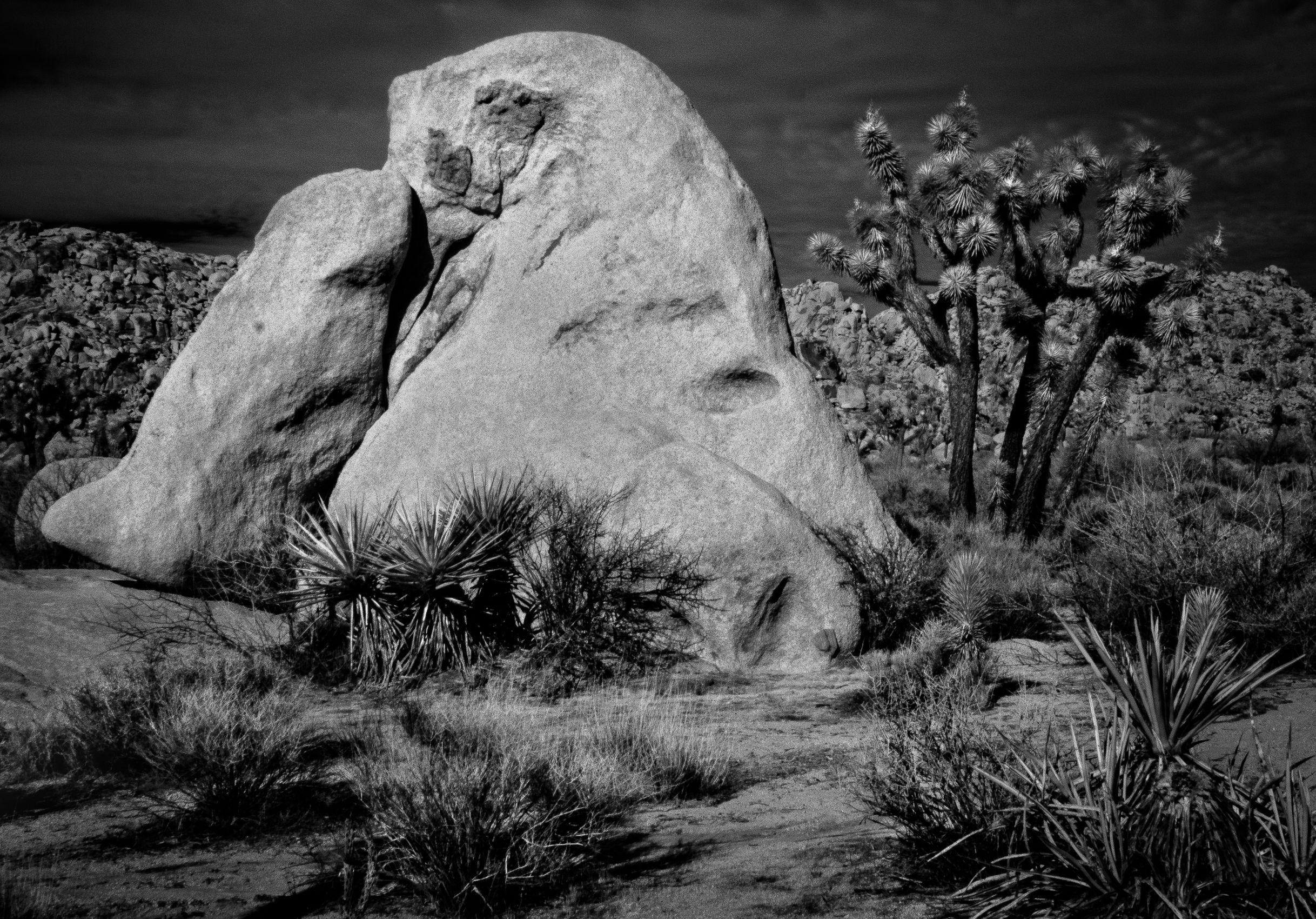 WONDERLAND OF ROCKS, JOSHUA TREE NATIONAL PARK  CALIFORNIA_