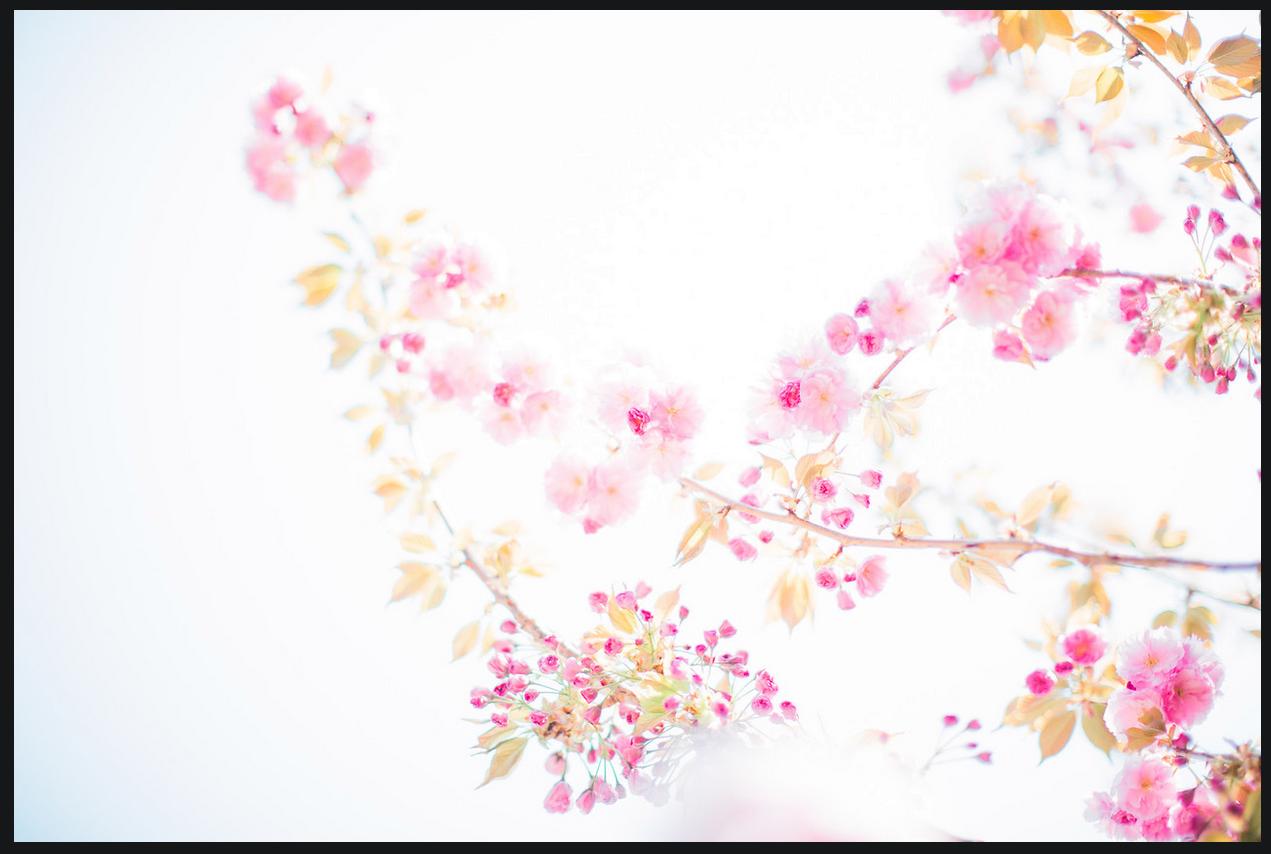 New-York-Portrait-Photographer-Tanya-Malott_0064_Cherry-Blossom-1.PNG
