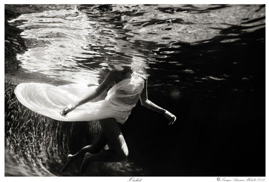 1orchid___tanyamalott_2014_underwater