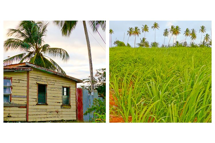 House and Sugarcane Field.