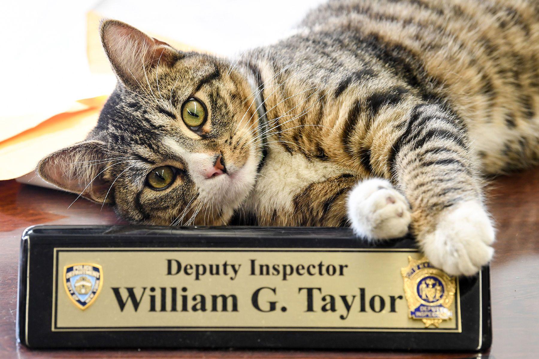 1022417_martin_the_police_catpm001