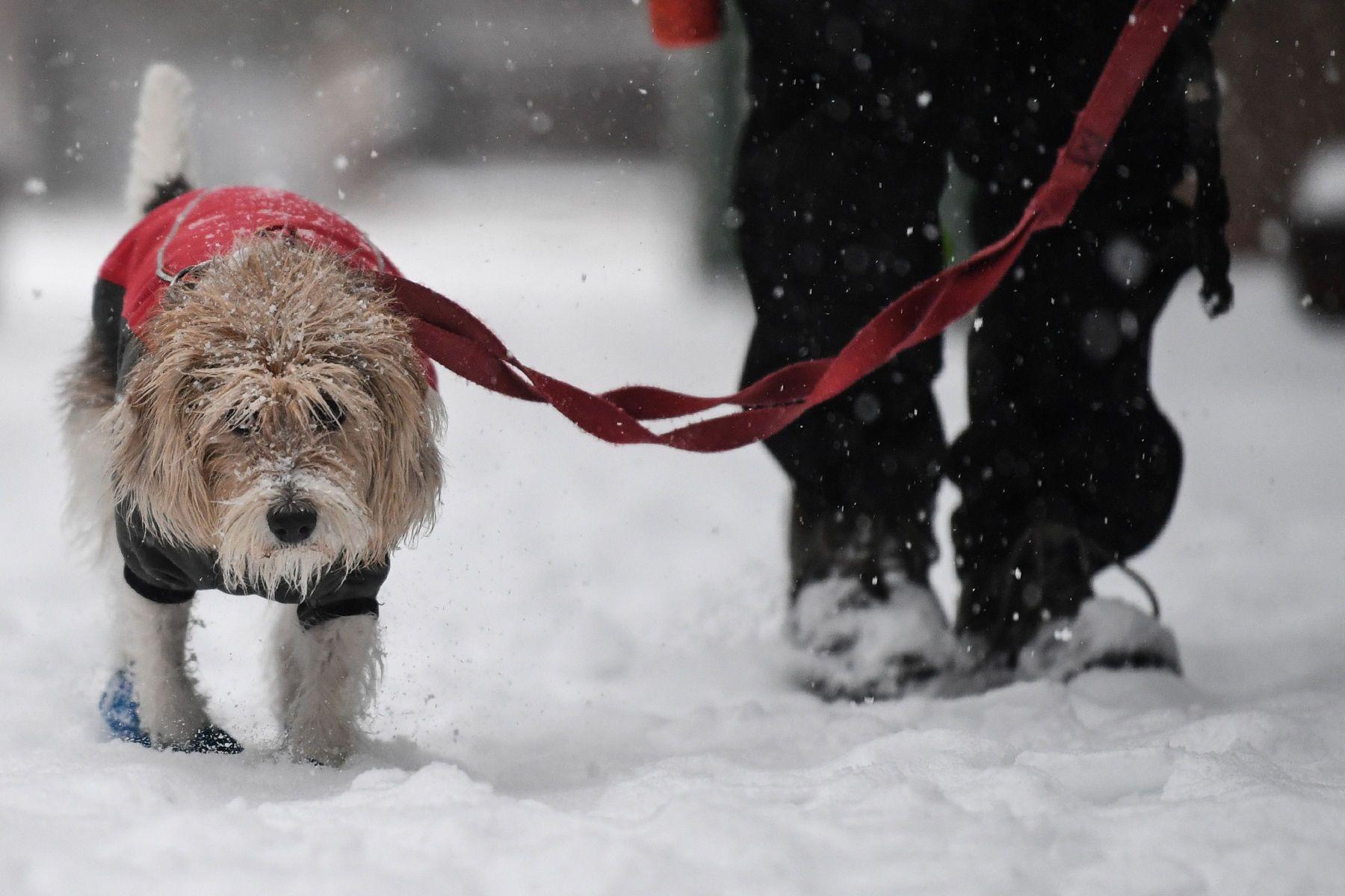 1r121716_nyc_snow_pixpm212