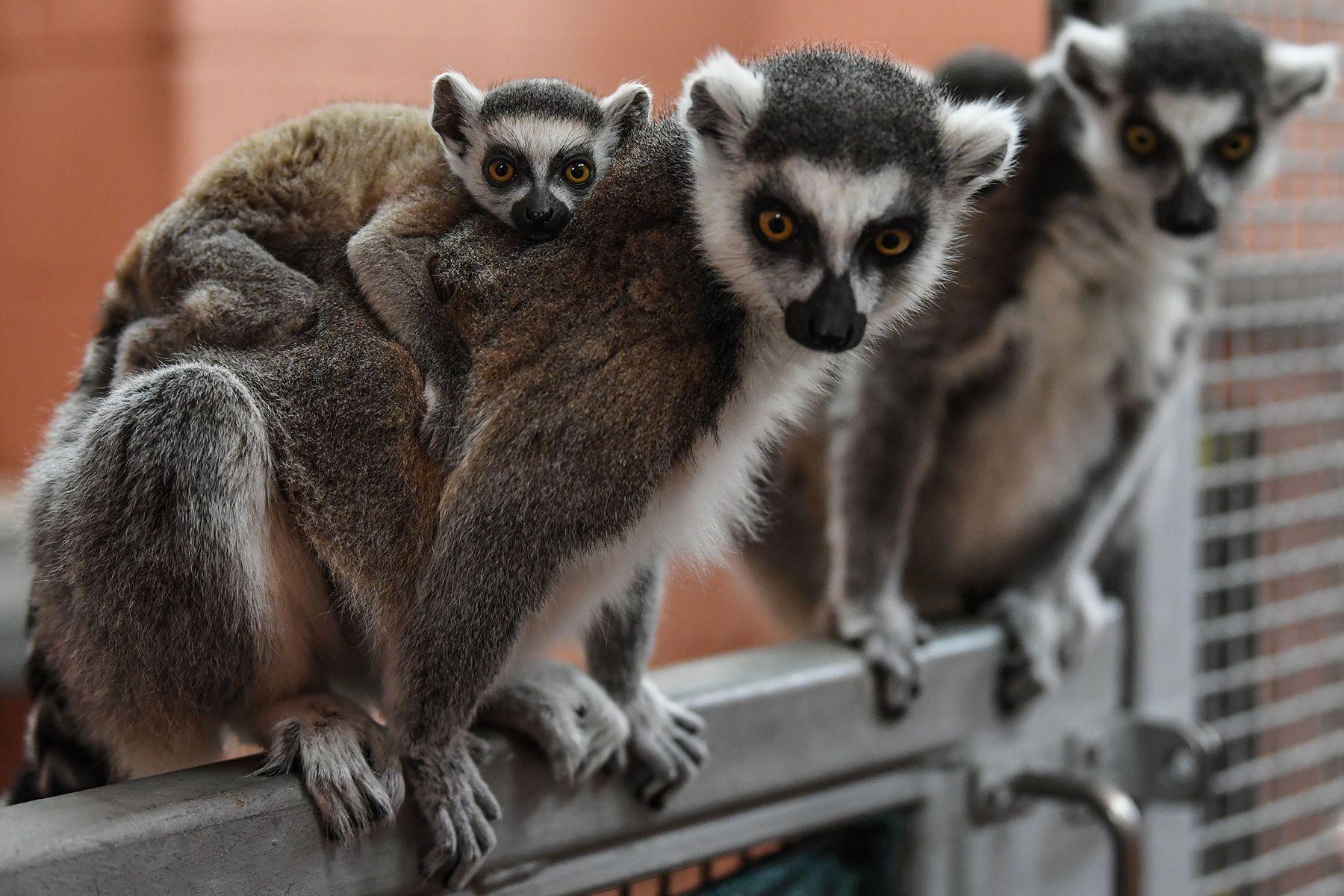1032817_staten_island_zoo_babiespm174