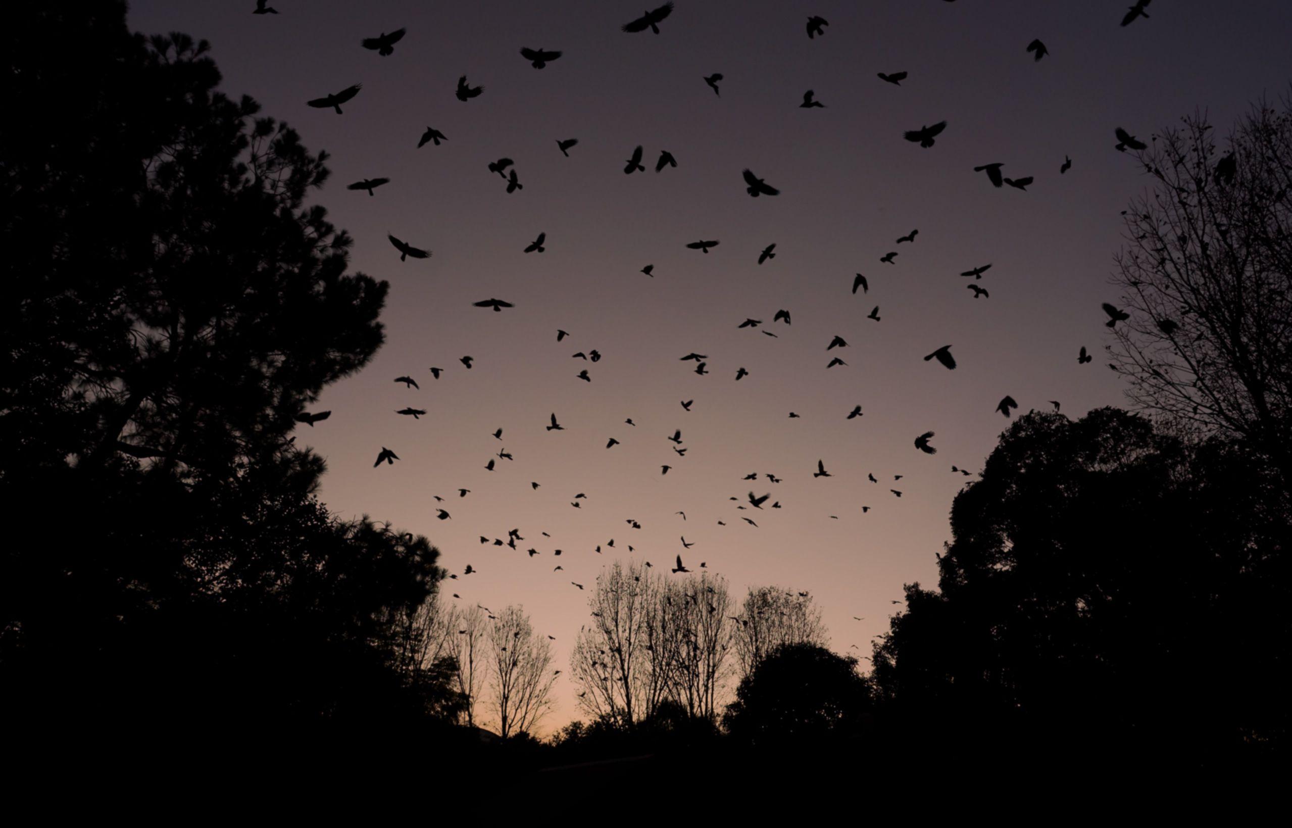 Kathmandu-Crows.jpg