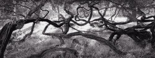6 Twisted-Tree.jpg