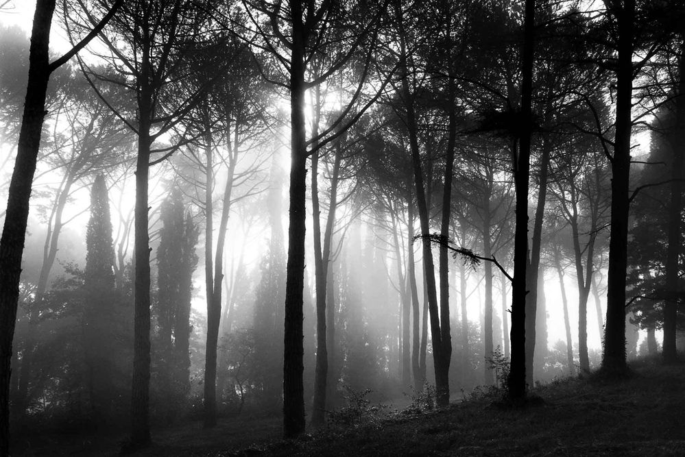 1foggy_trees