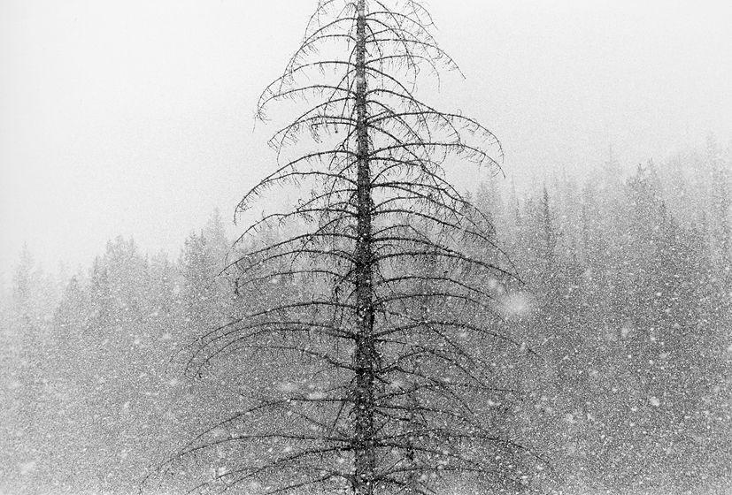 SNOWFALL, 1979