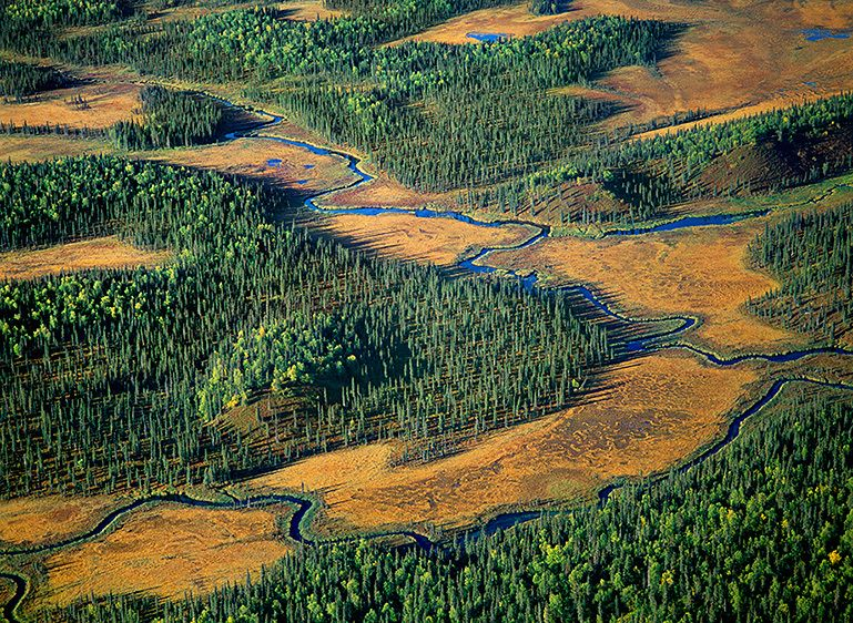 STREAMS AND TREE ISLANDS, 2001
