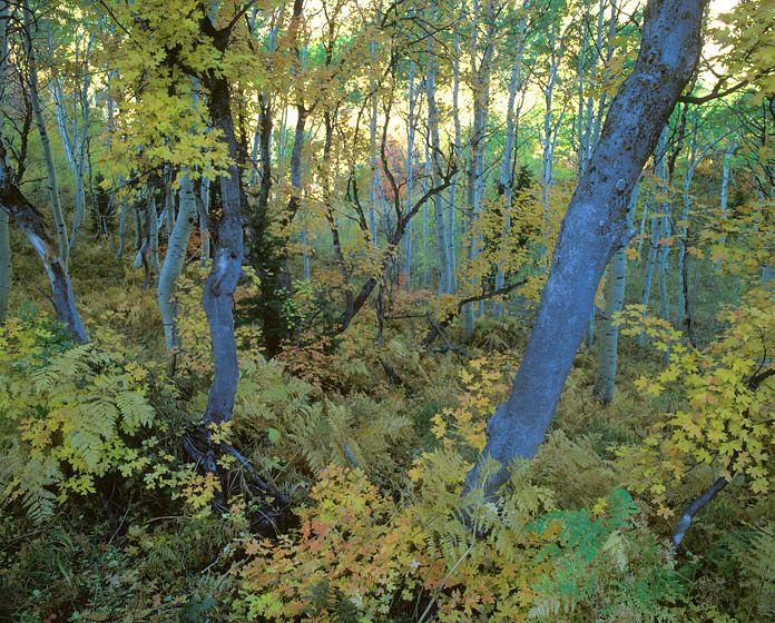 COSMIC TREES, 1988