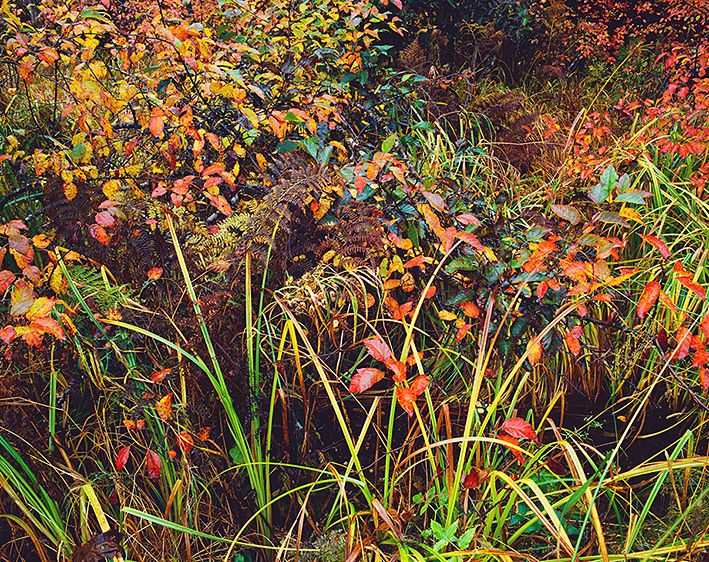 FALL COMES TO THE FOREST EDGE, 1986
