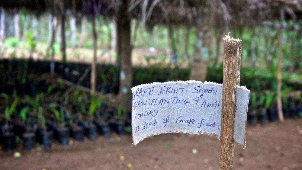 1plant_nursery_sierra_leone.jpg