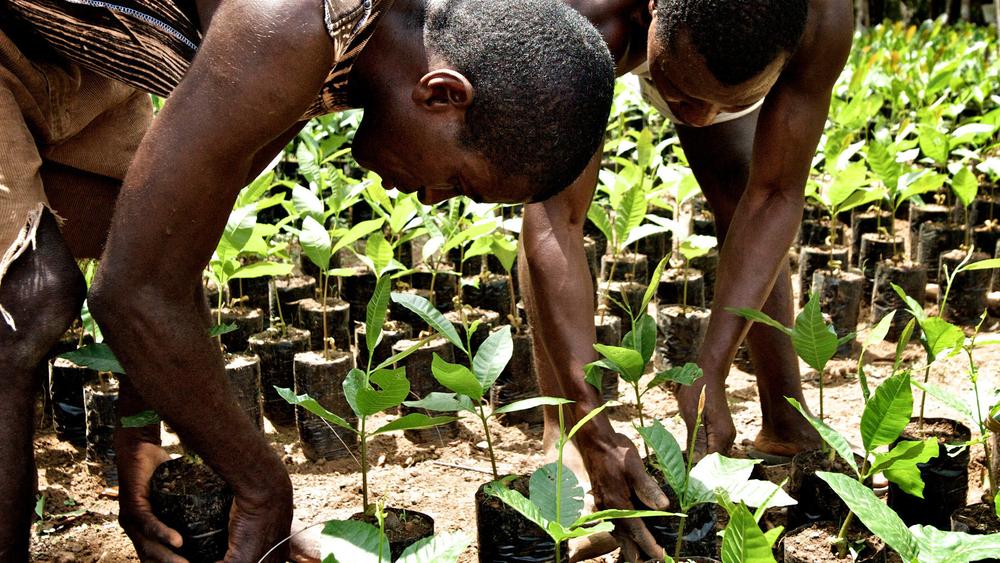 1planting_grapefruit_seedlings_tree_nursery_sierra_leone_sierra_rutile.jpg