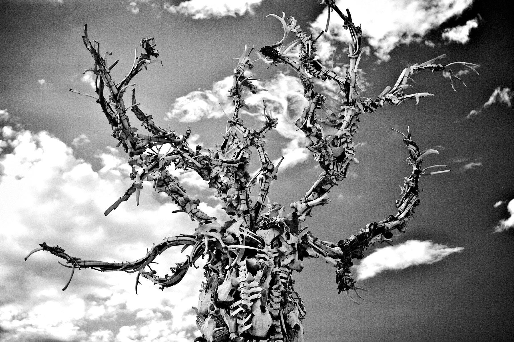 1bone_tree_dana_albany_burning_man.jpg