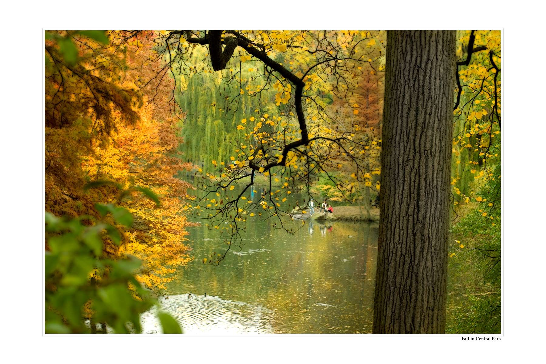 Fall-in-central-Park.jpg