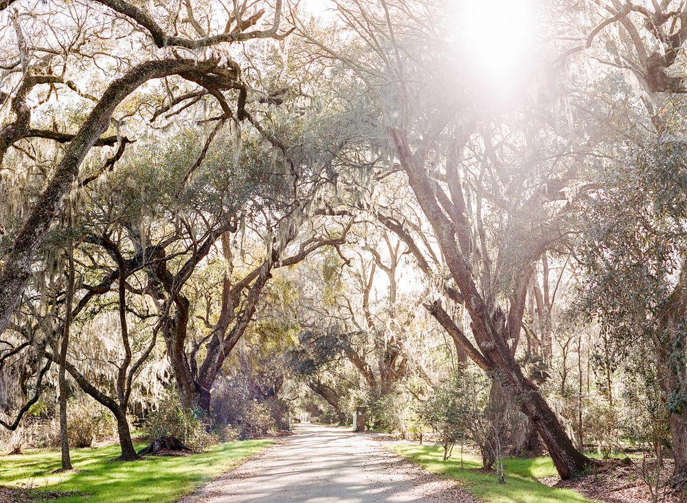 Magnolia Plantation Trees, SC