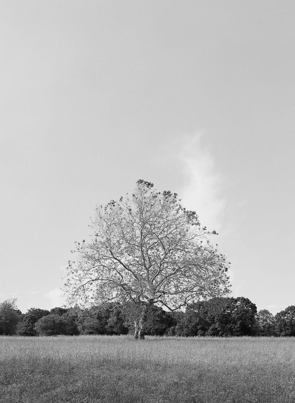 KareHillPhotography-Nassikas-Wedding-0503.jpg