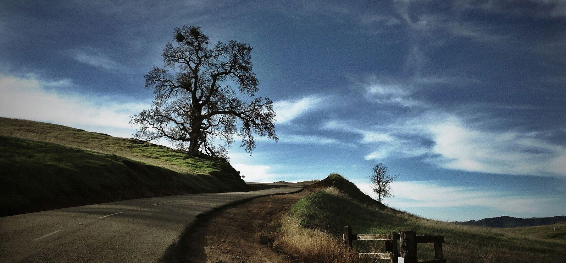 ROADSIDE TREE.jpg